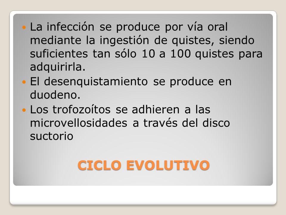 CICLO EVOLUTIVO CICLO EVOLUTIVO La infección se produce por vía oral mediante la ingestión de quistes, siendo suficientes tan sólo 10 a 100 quistes pa