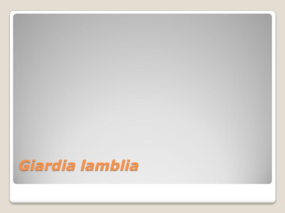 GIARDIASIS ANTECEDENTES HISTÓRICOS En la literatura se le cita como Giardia lamblia por los latinoamericanos y norteamericanos, Lamblia intestinalis por los europeos orientales y Giardia intestinalis o G.