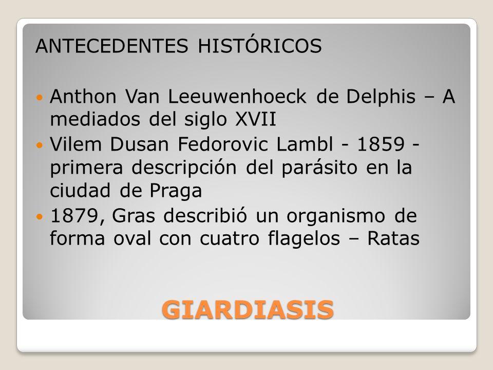 GIARDIASIS ANTECEDENTES HISTÓRICOS Anthon Van Leeuwenhoeck de Delphis – A mediados del siglo XVII Vilem Dusan Fedorovic Lambl - 1859 - primera descrip