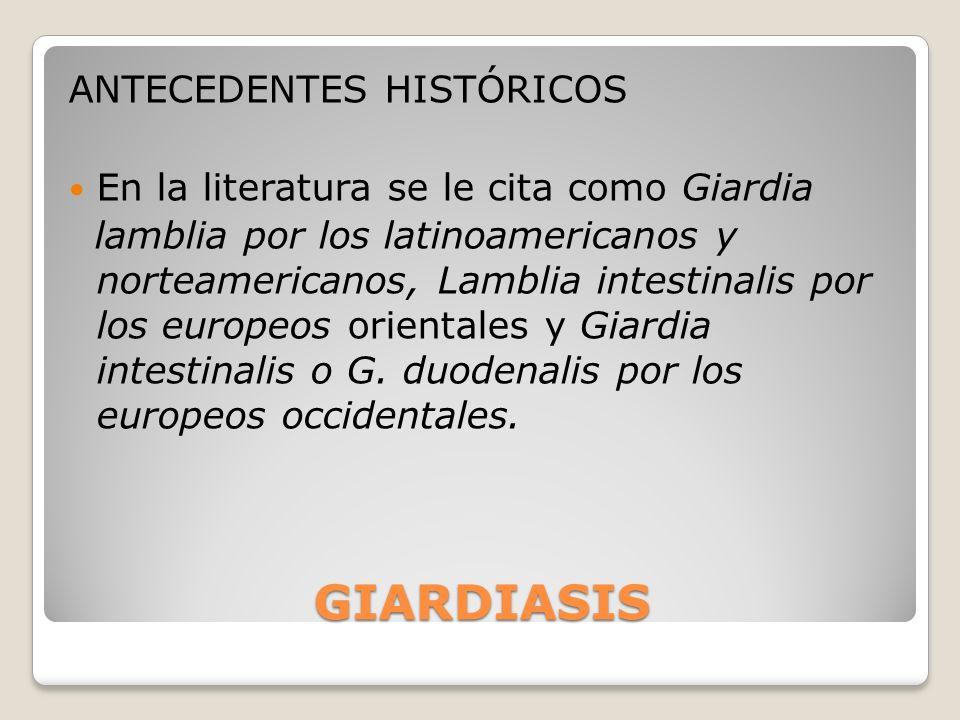 GIARDIASIS ANTECEDENTES HISTÓRICOS En la literatura se le cita como Giardia lamblia por los latinoamericanos y norteamericanos, Lamblia intestinalis p