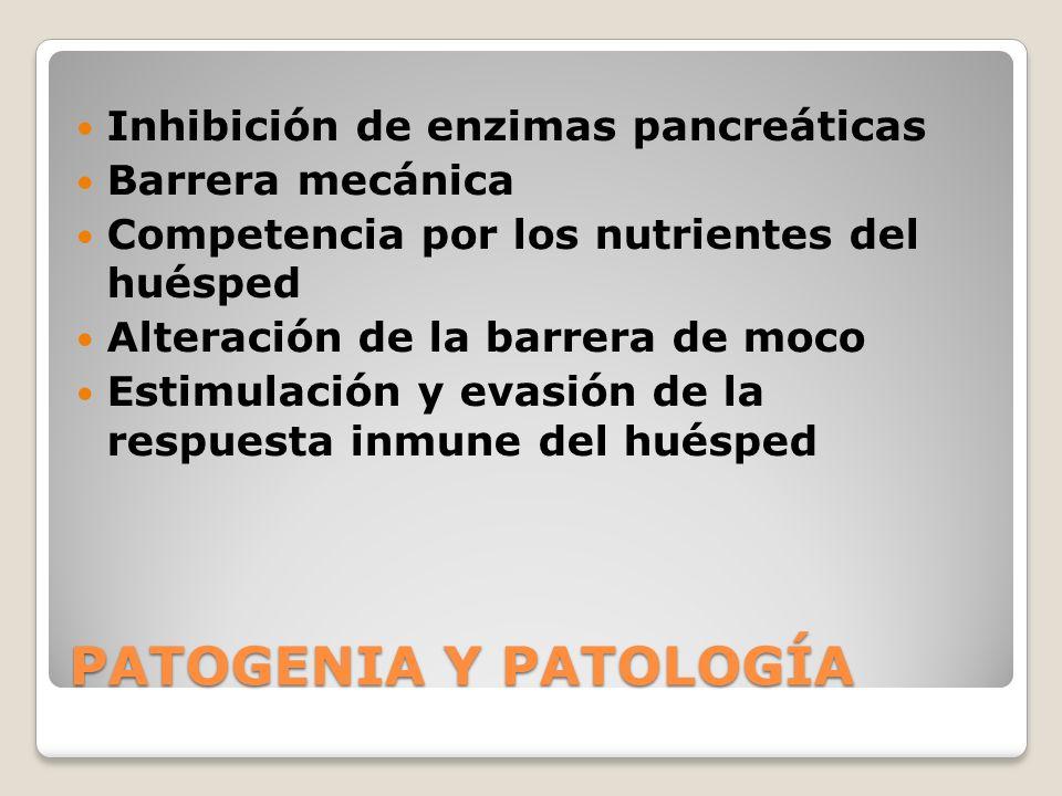 PATOGENIA Y PATOLOGÍA Inhibición de enzimas pancreáticas Barrera mecánica Competencia por los nutrientes del huésped Alteración de la barrera de moco
