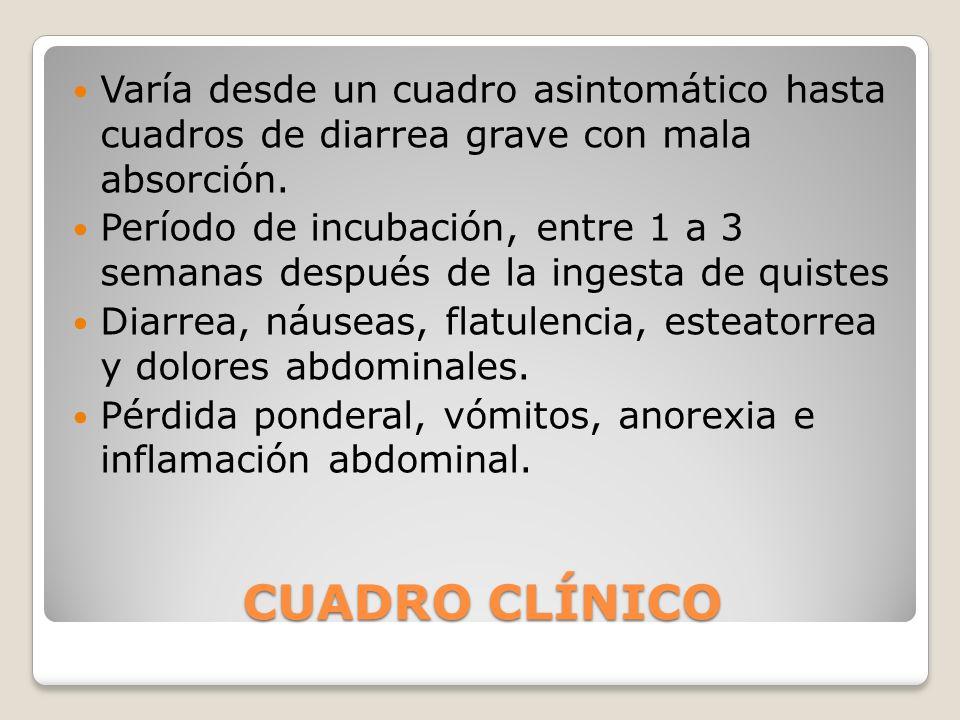 CUADRO CLÍNICO Varía desde un cuadro asintomático hasta cuadros de diarrea grave con mala absorción. Período de incubación, entre 1 a 3 semanas despué