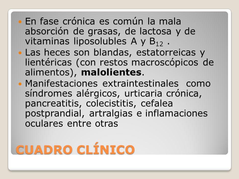 CUADRO CLÍNICO En fase crónica es común la mala absorción de grasas, de lactosa y de vitaminas liposolubles A y B 12. Las heces son blandas, estatorre