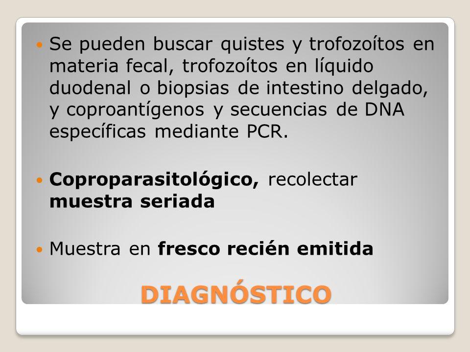 DIAGNÓSTICO Se pueden buscar quistes y trofozoítos en materia fecal, trofozoítos en líquido duodenal o biopsias de intestino delgado, y coproantígenos