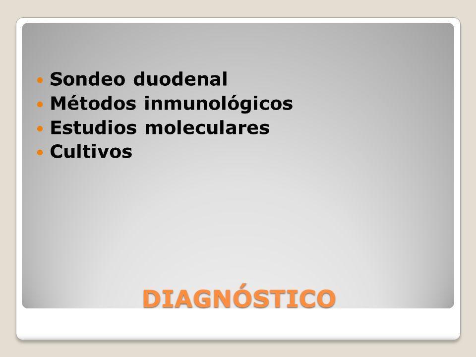DIAGNÓSTICO Sondeo duodenal Métodos inmunológicos Estudios moleculares Cultivos
