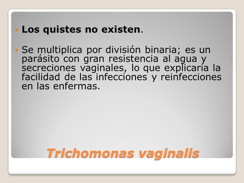 Trichomonas vaginalis Los quistes no existen. Se multiplica por división binaria; es un parásito con gran resistencia al agua y secreciones vaginales,