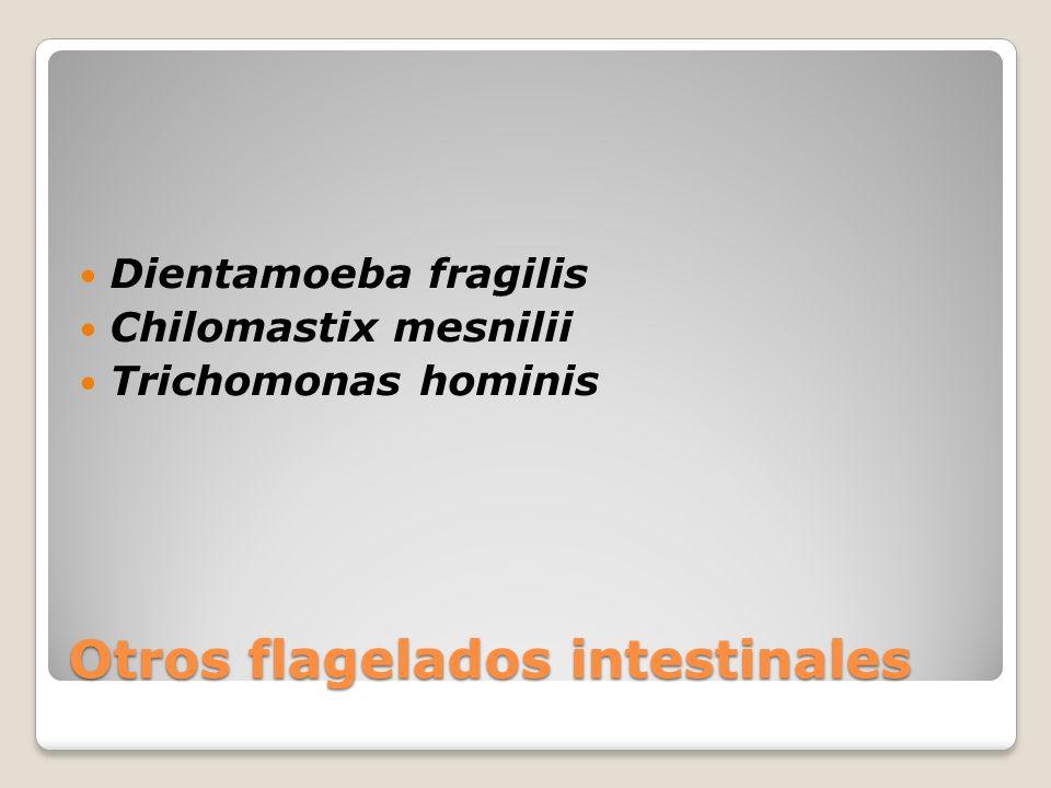 Otros flagelados intestinales Dientamoeba fragilis Chilomastix mesnilii Trichomonas hominis
