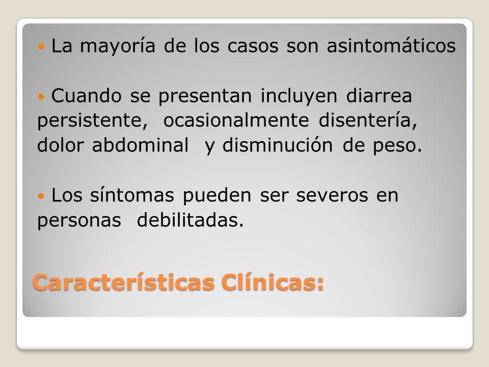 Características Clínicas: La mayoría de los casos son asintomáticos Cuando se presentan incluyen diarrea persistente, ocasionalmente disentería, dolor