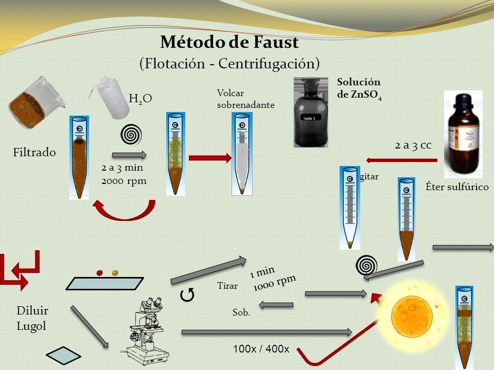 Método de Faust (Flotación - Centrifugación) Diluir 2 a 3 min 2000 rpm Volcar sobrenadante Éter sulfúrico Solución de ZnSO 4 2 a 3 cc Agitar 1 min 100