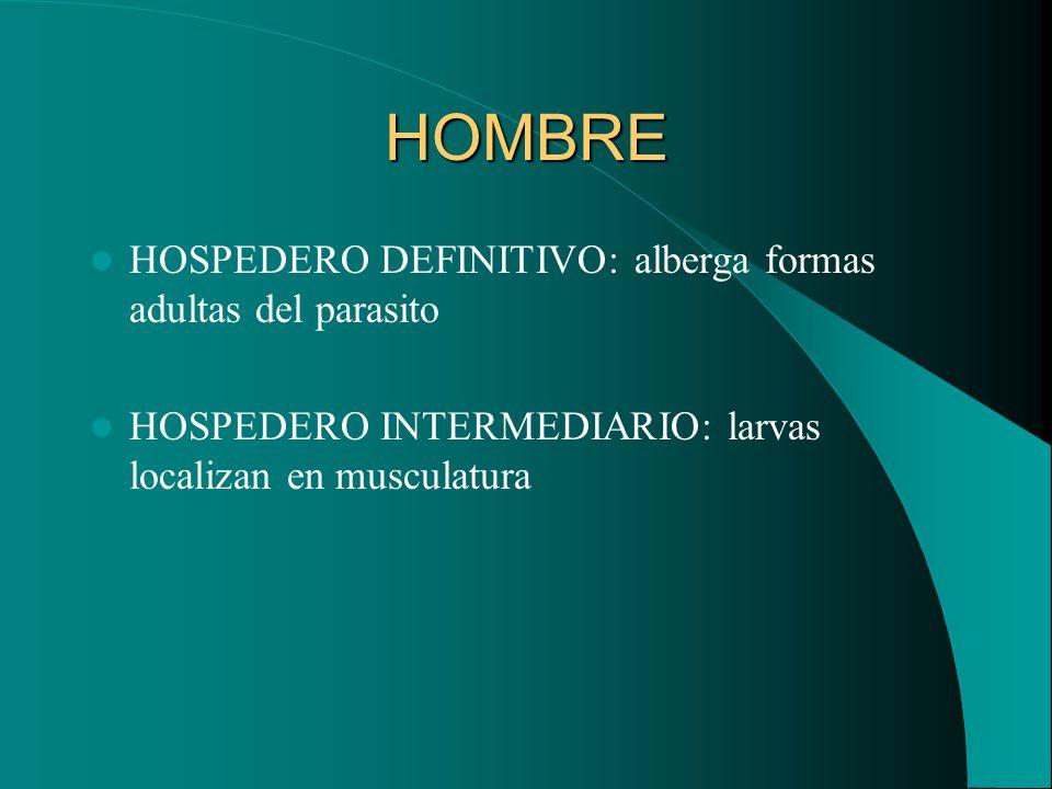 HOMBRE HOSPEDERO DEFINITIVO: alberga formas adultas del parasito HOSPEDERO INTERMEDIARIO: larvas localizan en musculatura