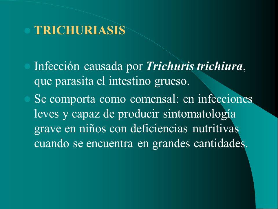 TRICHURIASIS Infección causada por Trichuris trichiura, que parasita el intestino grueso. Se comporta como comensal: en infecciones leves y capaz de p