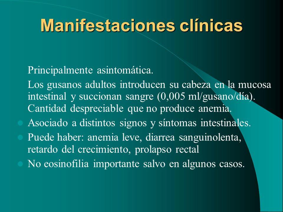 Manifestaciones clínicas Principalmente asintomática. Los gusanos adultos introducen su cabeza en la mucosa intestinal y succionan sangre (0,005 ml/gu