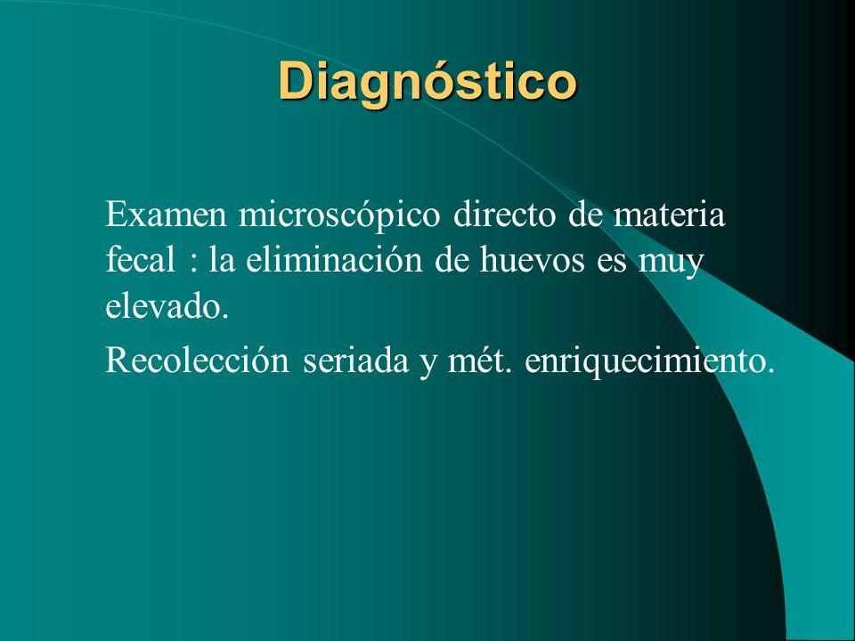 Diagnóstico Examen microscópico directo de materia fecal : la eliminación de huevos es muy elevado. Recolección seriada y mét. enriquecimiento.