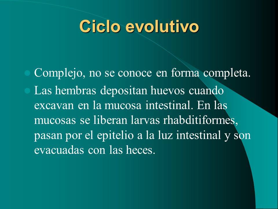 Ciclo evolutivo Complejo, no se conoce en forma completa. Las hembras depositan huevos cuando excavan en la mucosa intestinal. En las mucosas se liber