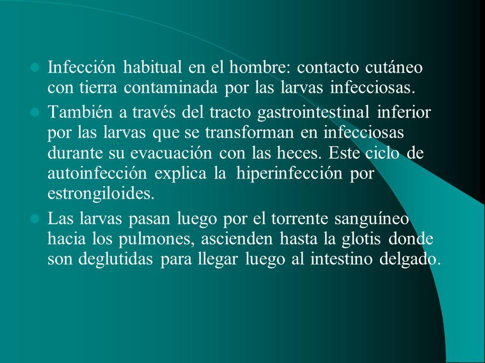 Infección habitual en el hombre: contacto cutáneo con tierra contaminada por las larvas infecciosas. También a través del tracto gastrointestinal infe
