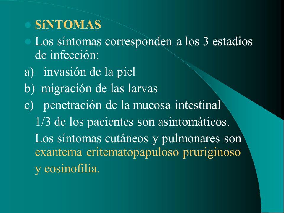 SíNTOMAS Los síntomas corresponden a los 3 estadios de infección: a) invasión de la piel b) migración de las larvas c) penetración de la mucosa intest