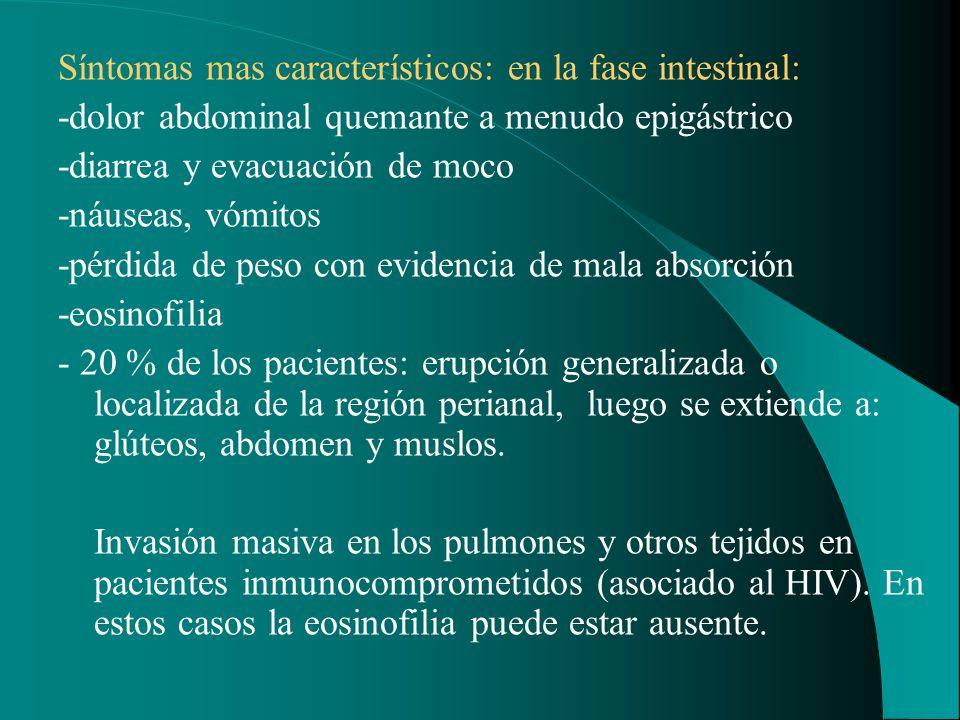 Síntomas mas característicos: en la fase intestinal: -dolor abdominal quemante a menudo epigástrico -diarrea y evacuación de moco -náuseas, vómitos -p