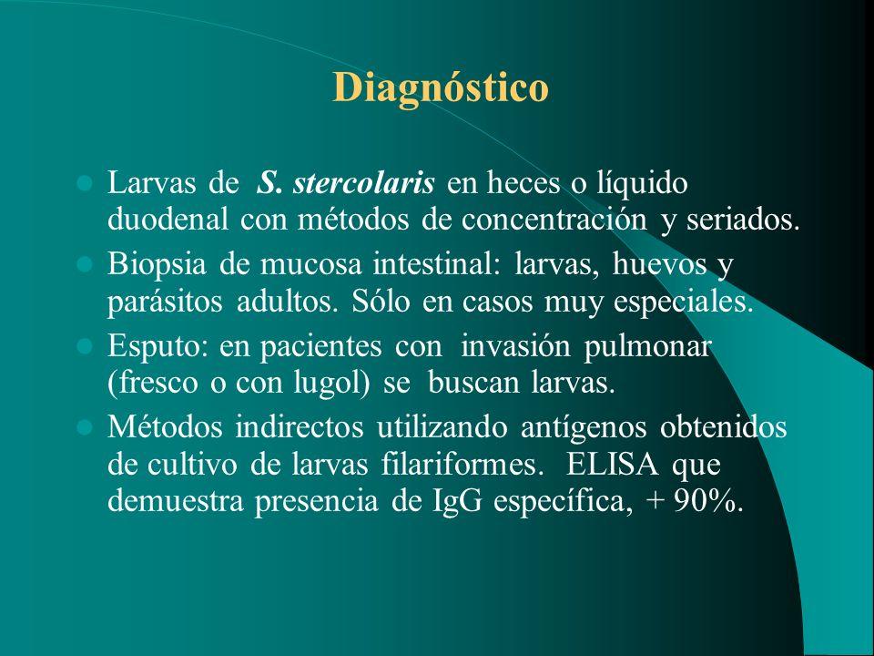 Diagnóstico Larvas de S. stercolaris en heces o líquido duodenal con métodos de concentración y seriados. Biopsia de mucosa intestinal: larvas, huevos