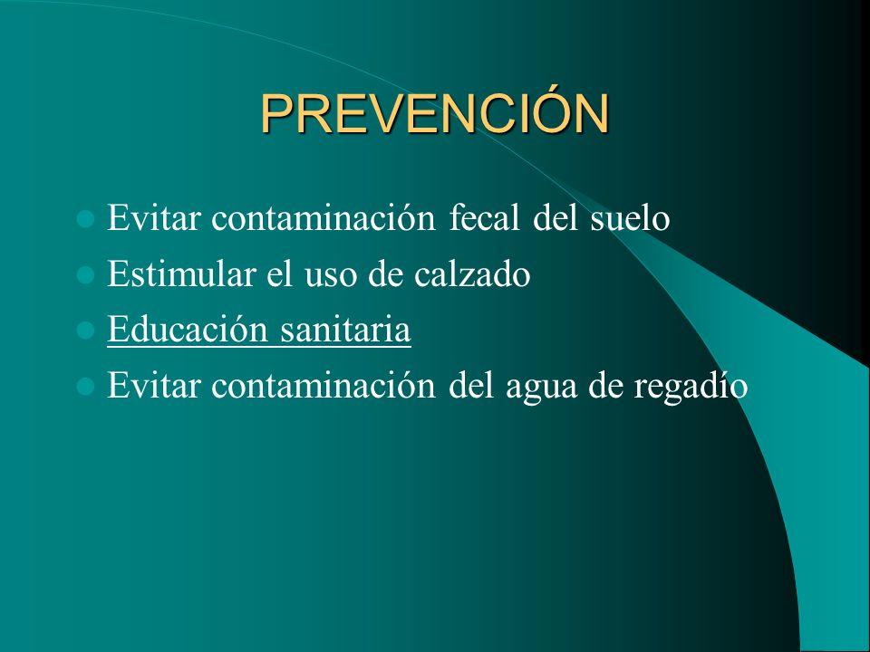 PREVENCIÓN Evitar contaminación fecal del suelo Estimular el uso de calzado Educación sanitaria Evitar contaminación del agua de regadío