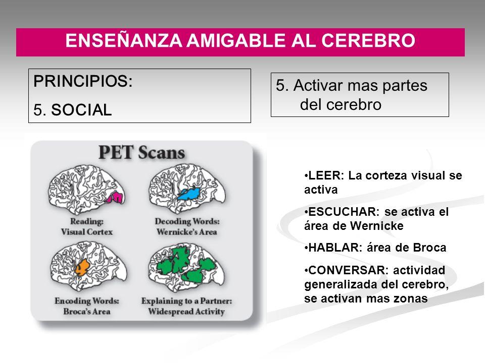 ENSEÑANZA AMIGABLE AL CEREBRO PRINCIPIOS: 5. SOCIAL 5. Activar mas partes del cerebro LEER: La corteza visual se activa ESCUCHAR: se activa el área de