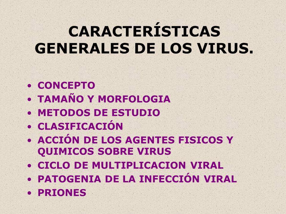 CARACTERÍSTICAS GENERALES DE LOS VIRUS. CONCEPTO TAMAÑO Y MORFOLOGIA METODOS DE ESTUDIO CLASIFICACIÓN ACCIÓN DE LOS AGENTES FISICOS Y QUIMICOS SOBRE V
