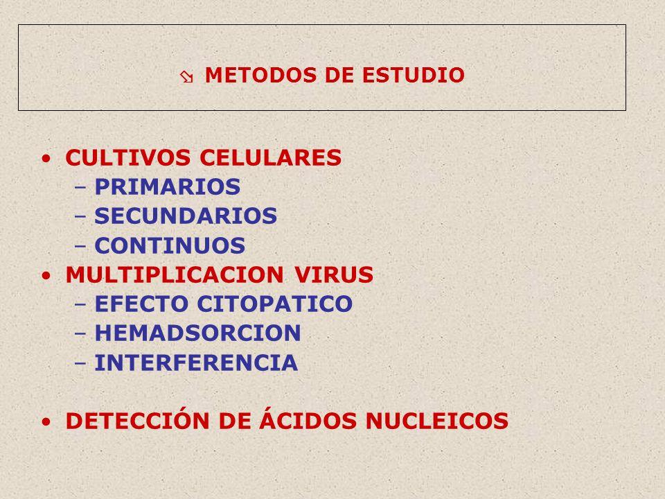 METODOS DE ESTUDIO CULTIVOS CELULARES –PRIMARIOS –SECUNDARIOS –CONTINUOS MULTIPLICACION VIRUS –EFECTO CITOPATICO –HEMADSORCION –INTERFERENCIA DETECCIÓN DE ÁCIDOS NUCLEICOS