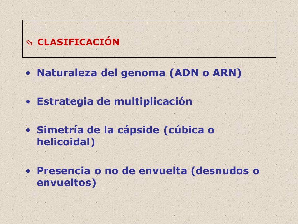 CLASIFICACIÓN Naturaleza del genoma (ADN o ARN) Estrategia de multiplicación Simetría de la cápside (cúbica o helicoidal) Presencia o no de envuelta (desnudos o envueltos)