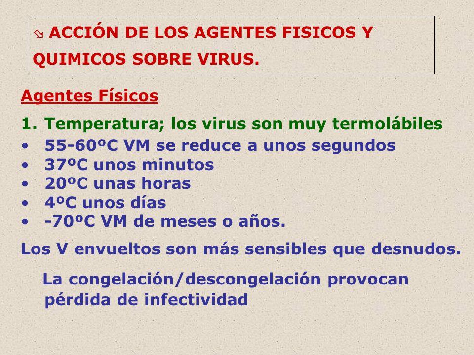 ACCIÓN DE LOS AGENTES FISICOS Y QUIMICOS SOBRE VIRUS. Agentes Físicos 1.Temperatura; los virus son muy termolábiles 55-60ºC VM se reduce a unos segund
