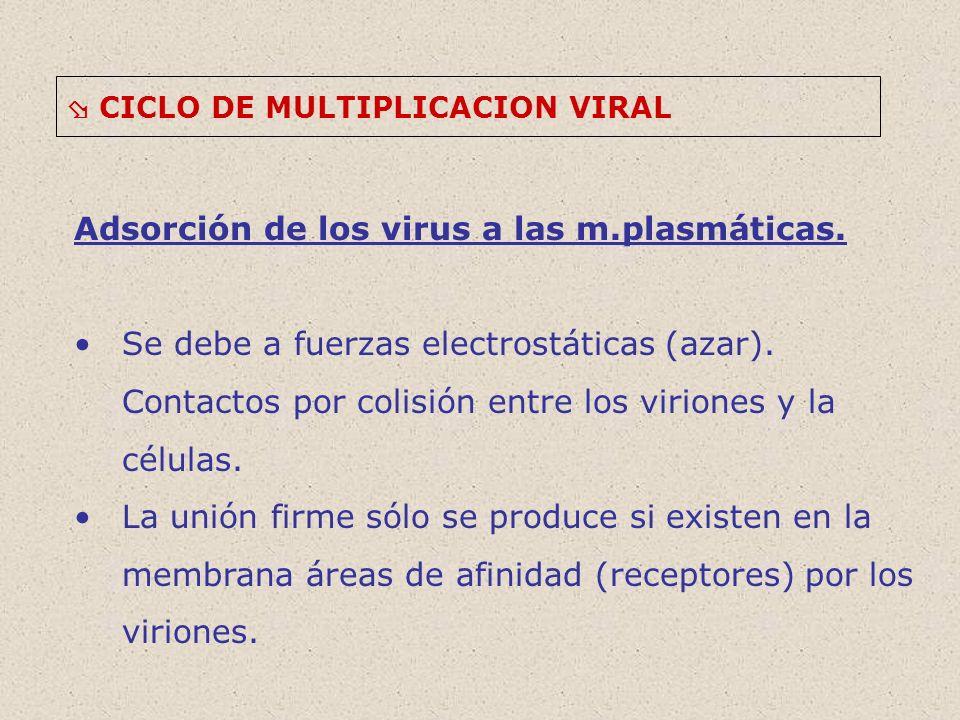 CICLO DE MULTIPLICACION VIRAL Adsorción de los virus a las m.plasmáticas.