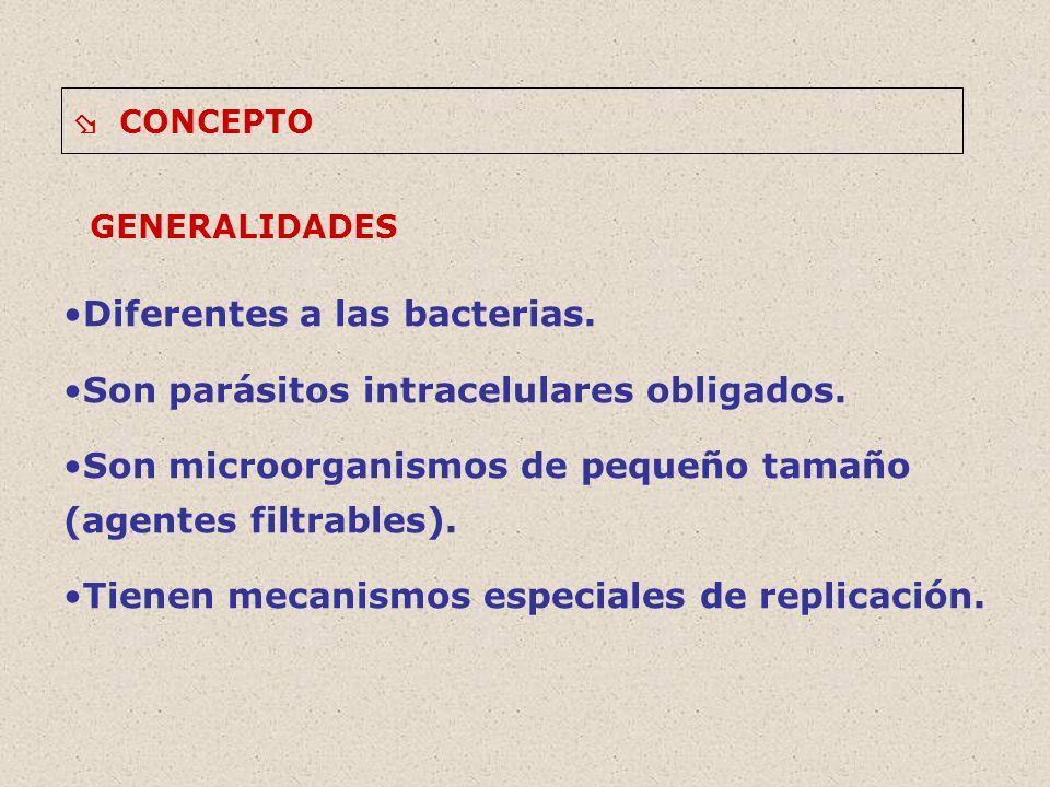 CONCEPTO Los virus se subdividen en tres grupos en función de la célula que infecten (huésped genérico).