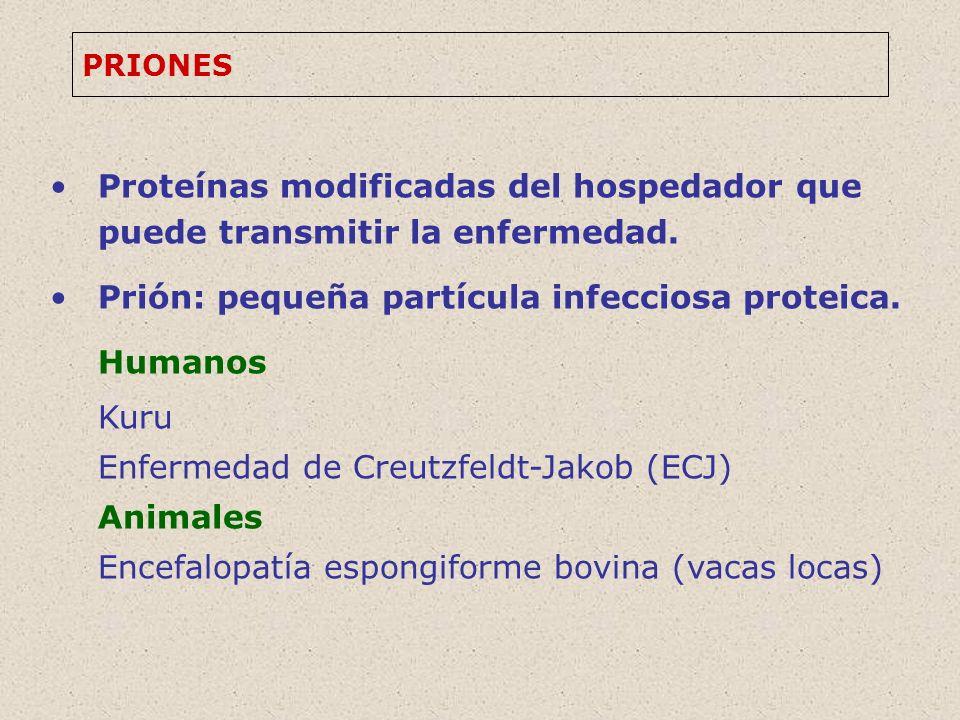 PRIONES Proteínas modificadas del hospedador que puede transmitir la enfermedad.