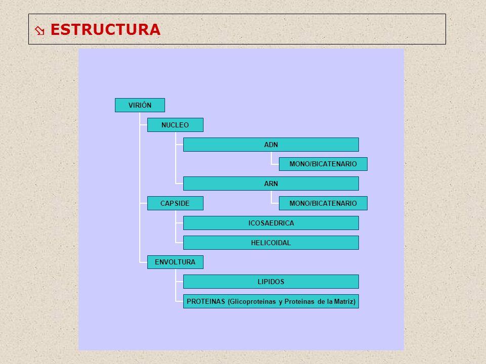 ESTRUCTURA VIRIÓN NUCLEO ADN MONO/BICATENARIO ARN MONO/BICATENARIO CAPSIDE ICOSAEDRICA HELICOIDAL ENVOLTURA LIPIDOS PROTEINAS (Glicoproteinas y Proteinas de la Matriz)