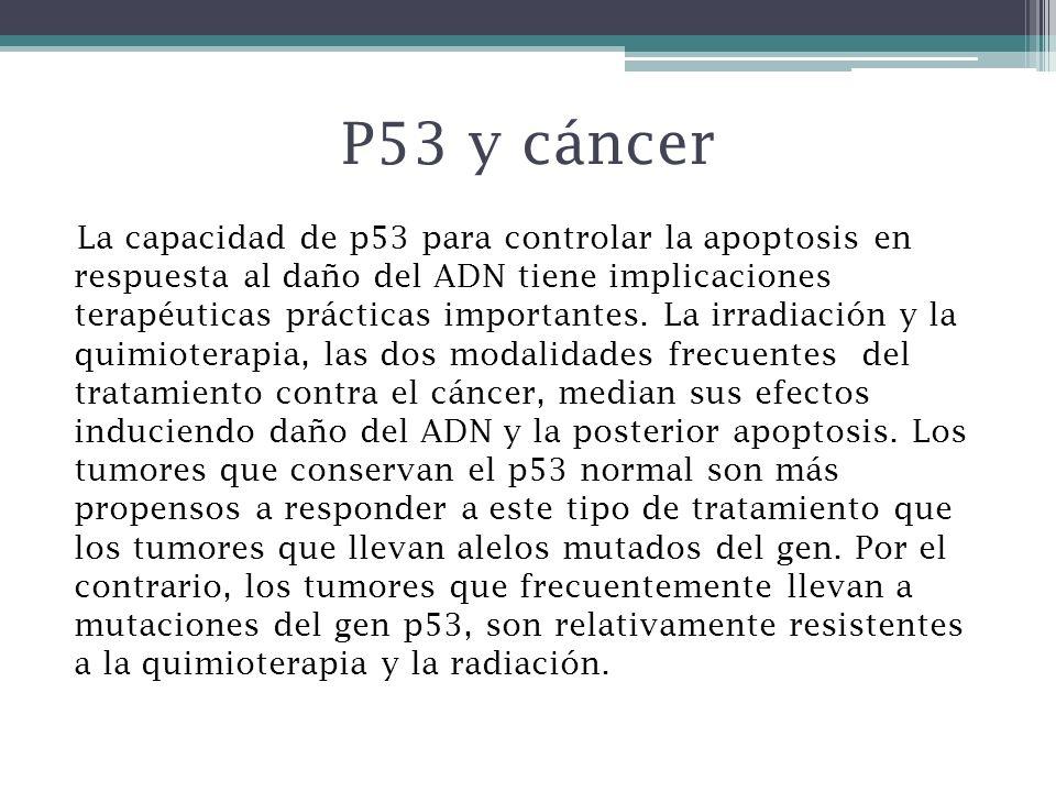 P53 y cáncer La capacidad de p53 para controlar la apoptosis en respuesta al daño del ADN tiene implicaciones terapéuticas prácticas importantes. La i