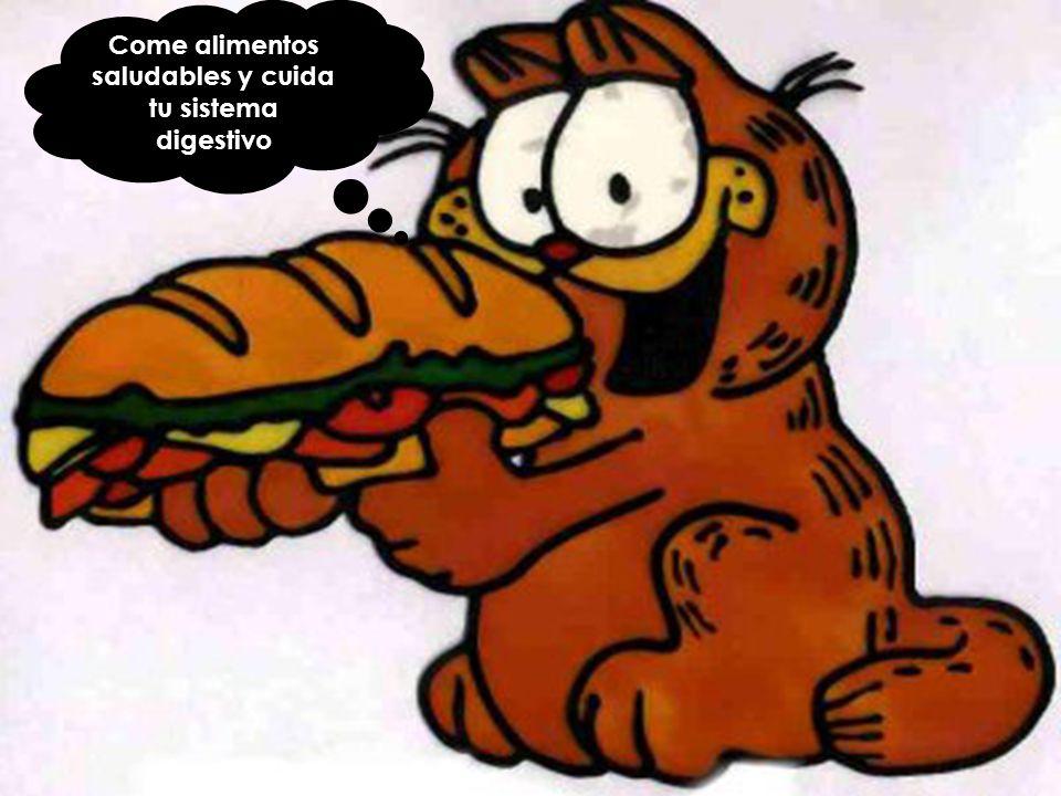 Come alimentos saludables y cuida tu sistema digestivo