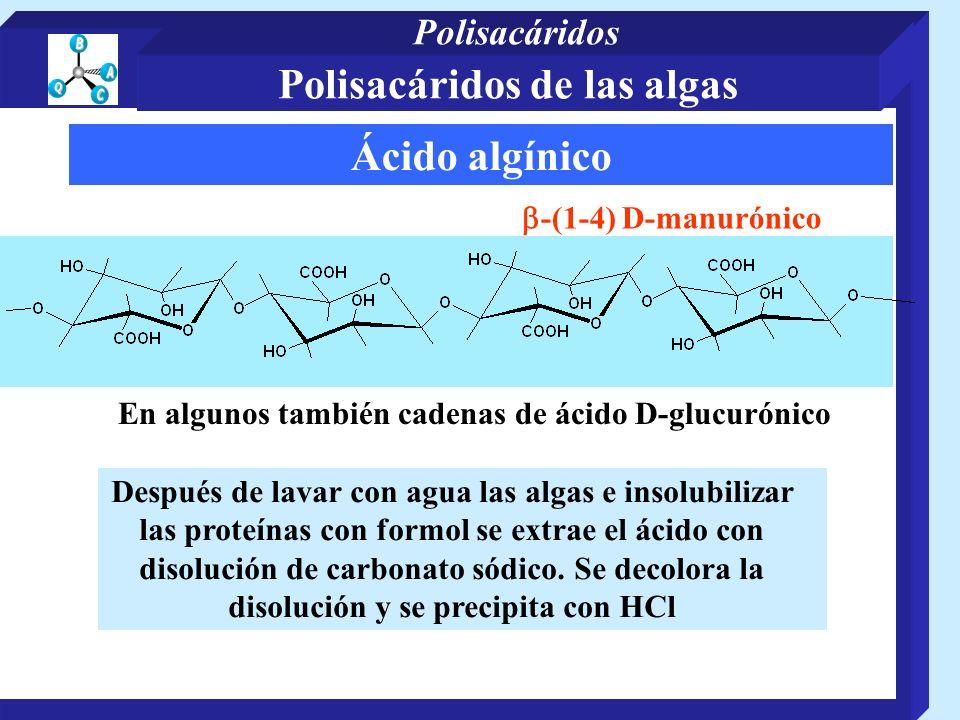 Ácido algínico -(1-4) D-manurónico En algunos también cadenas de ácido D-glucurónico Después de lavar con agua las algas e insolubilizar las proteínas