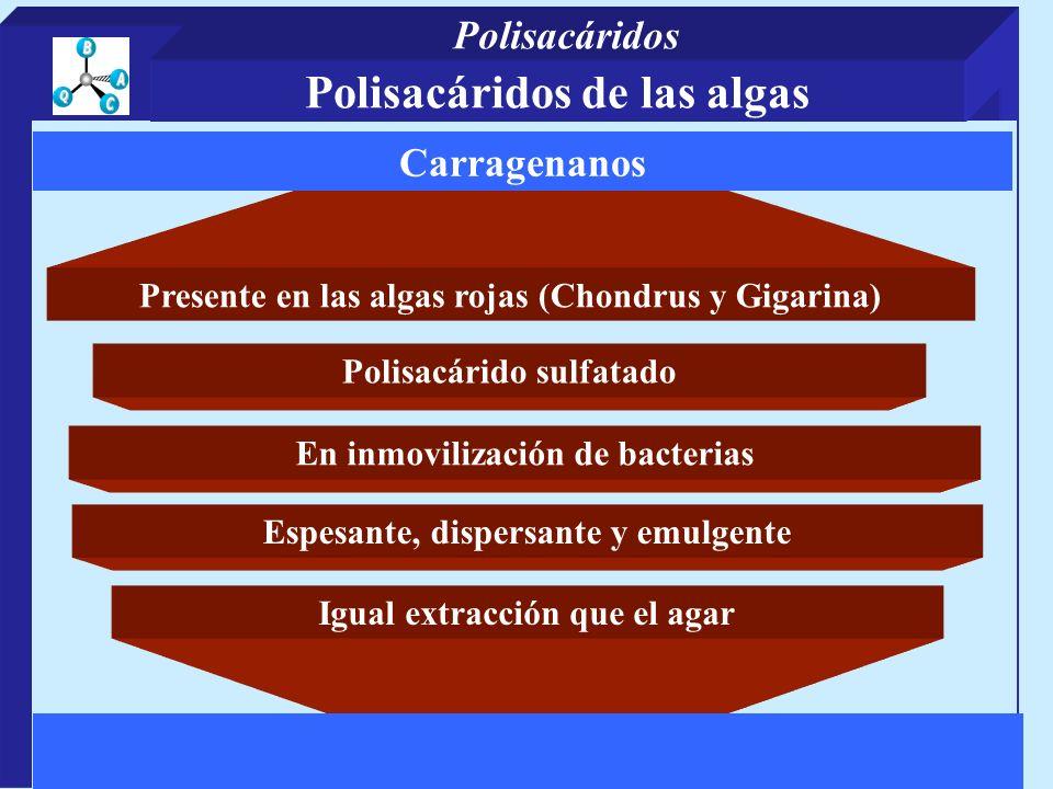 Presente en las algas rojas (Chondrus y Gigarina) Polisacárido sulfatado Igual extracción que el agar Carragenanos En inmovilización de bacterias Espe