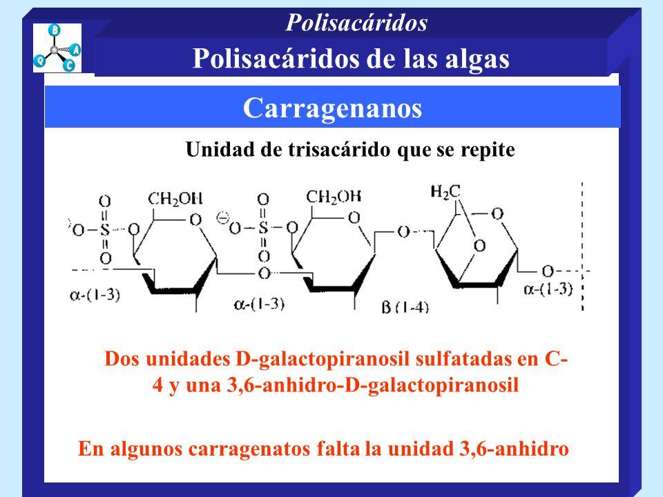 Carragenanos Unidad de trisacárido que se repite Dos unidades D-galactopiranosil sulfatadas en C- 4 y una 3,6-anhidro-D-galactopiranosil En algunos carragenatos falta la unidad 3,6-anhidro Polisacáridos de las algas Polisacáridos