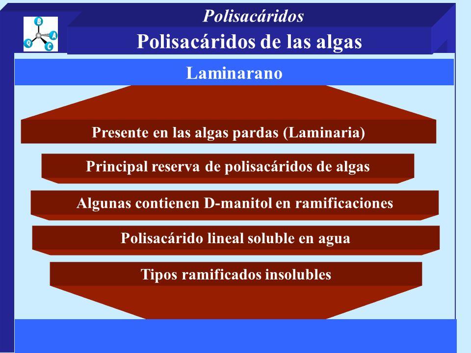 Presente en las algas pardas (Laminaria) Principal reserva de polisacáridos de algas Tipos ramificados insolubles Laminarano Algunas contienen D-manit