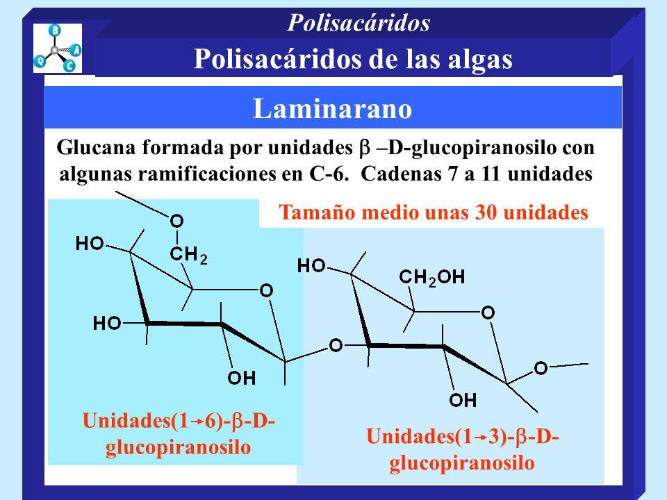 Laminarano Glucana formada por unidades –D-glucopiranosilo con algunas ramificaciones en C-6. Cadenas 7 a 11 unidades Unidades(1 3)- -D- glucopiranosi