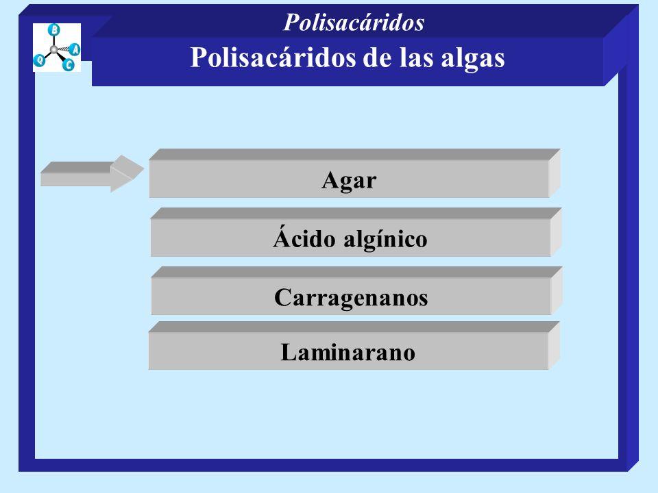 Presentes en membranas de varias especies de bacterias Ácidos teicoicos Ácidos Poli(glicerol fosfato) teicoicos R= -D-glcpNAc 1 R= -D-glcpNAc 1 R= -D-glcp 1 Más abundantes que los de glicerol R= -D-galpNAc 1 Polisacáridos de las bacterias Polisacáridos