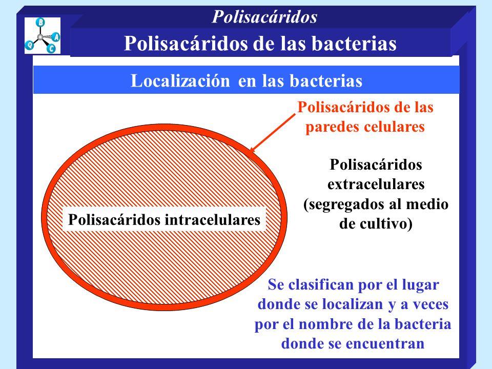 Localización en las bacterias Polisacáridos de las paredes celulares Polisacáridos intracelulares Polisacáridos extracelulares (segregados al medio de cultivo) Se clasifican por el lugar donde se localizan y a veces por el nombre de la bacteria donde se encuentran Polisacáridos de las bacterias Polisacáridos