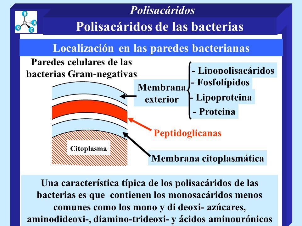 Localización en las paredes bacterianas - Lipopolisacáridos - Lipoproteina - Fosfolípidos Citoplasma Peptidoglicanas Membrana exterior - Proteina Pare
