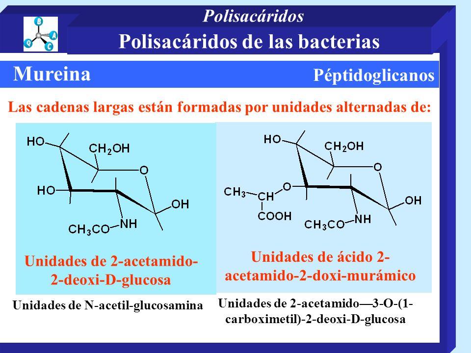 Péptidoglicanos Mureina Unidades de ácido 2- acetamido-2-doxi-murámico Unidades de 2-acetamido- 2-deoxi-D-glucosa Las cadenas largas están formadas por unidades alternadas de: Unidades de N-acetil-glucosamina Unidades de 2-acetamido3-O-(1- carboximetil)-2-deoxi-D-glucosa Polisacáridos de las bacterias Polisacáridos