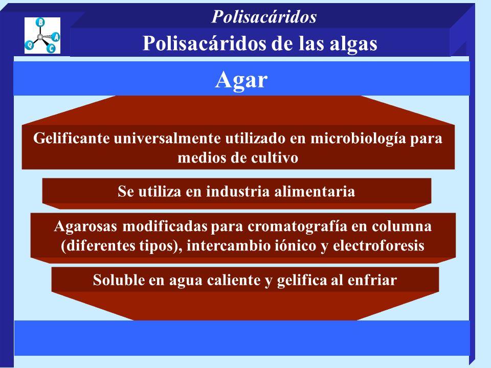 Polisacáridos de las algas Gelificante universalmente utilizado en microbiología para medios de cultivo Se utiliza en industria alimentaria Soluble en agua caliente y gelifica al enfriar Agar Agarosas modificadas para cromatografía en columna (diferentes tipos), intercambio iónico y electroforesis Polisacáridos
