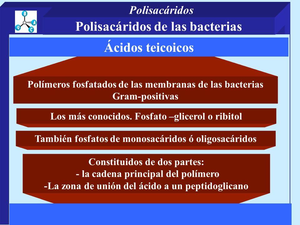 Polímeros fosfatados de las membranas de las bacterias Gram-positivas Constituidos de dos partes: - la cadena principal del polímero -La zona de unión del ácido a un peptidoglicano Ácidos teicoicos Los más conocidos.