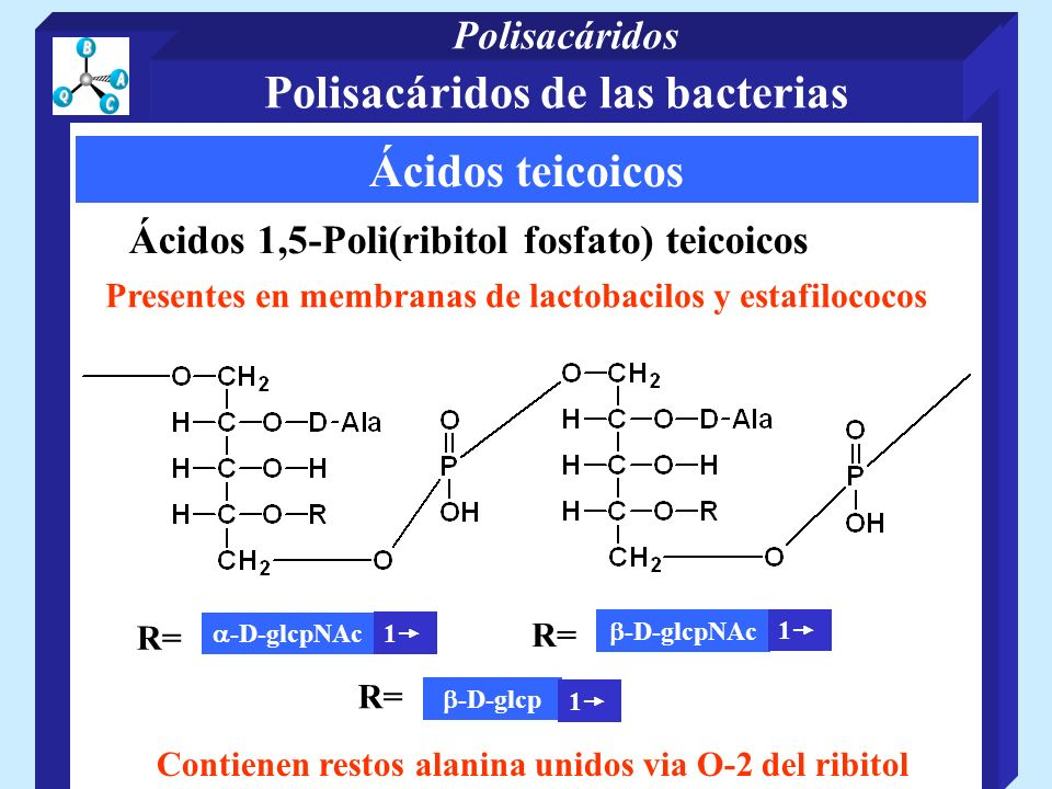 Presentes en membranas de lactobacilos y estafilococos Contienen restos alanina unidos via O-2 del ribitol Ácidos teicoicos Ácidos 1,5-Poli(ribitol fosfato) teicoicos R= -D-glcpNAc 1 R= -D-glcpNAc 1 R= -D-glcp 1 Polisacáridos de las bacterias Polisacáridos