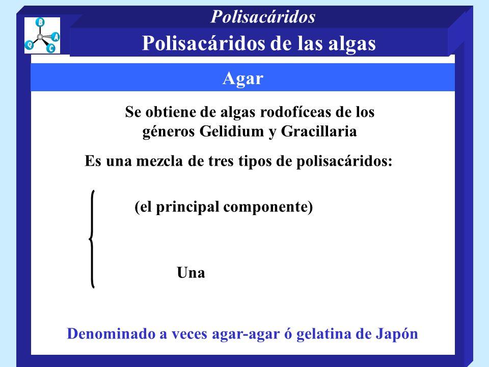 Agar Es una mezcla de tres tipos de polisacáridos: (el principal componente) Se obtiene de algas rodofíceas de los géneros Gelidium y Gracillaria Una Denominado a veces agar-agar ó gelatina de Japón Polisacáridos de las algas Polisacáridos