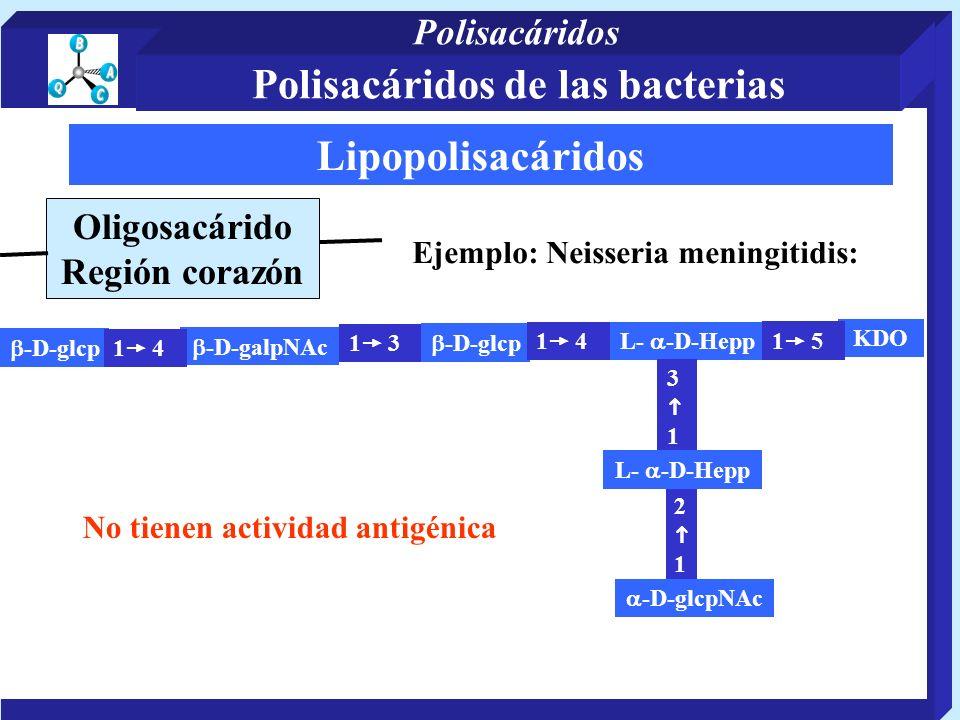 Lipopolisacáridos Oligosacárido Región corazón Ejemplo: Neisseria meningitidis: -D-galpNAc -D-glcp L- -D-Hepp 3 1 KDO 1 4 2 1 -D-glcpNAc 1 3 -D-glcp 1 4 1 5 L- -D-Hepp No tienen actividad antigénica Polisacáridos de las bacterias Polisacáridos