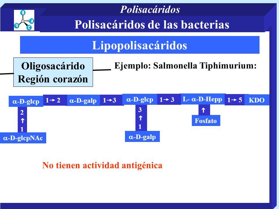 Lipopolisacáridos Oligosacárido Región corazón Ejemplo: Salmonella Tiphimurium: -D-galp L- -D-Hepp 3 1 1 5 2 1 -D-glcpNAc 1 2 -D-glcp 1 3 Fosfato -D-g