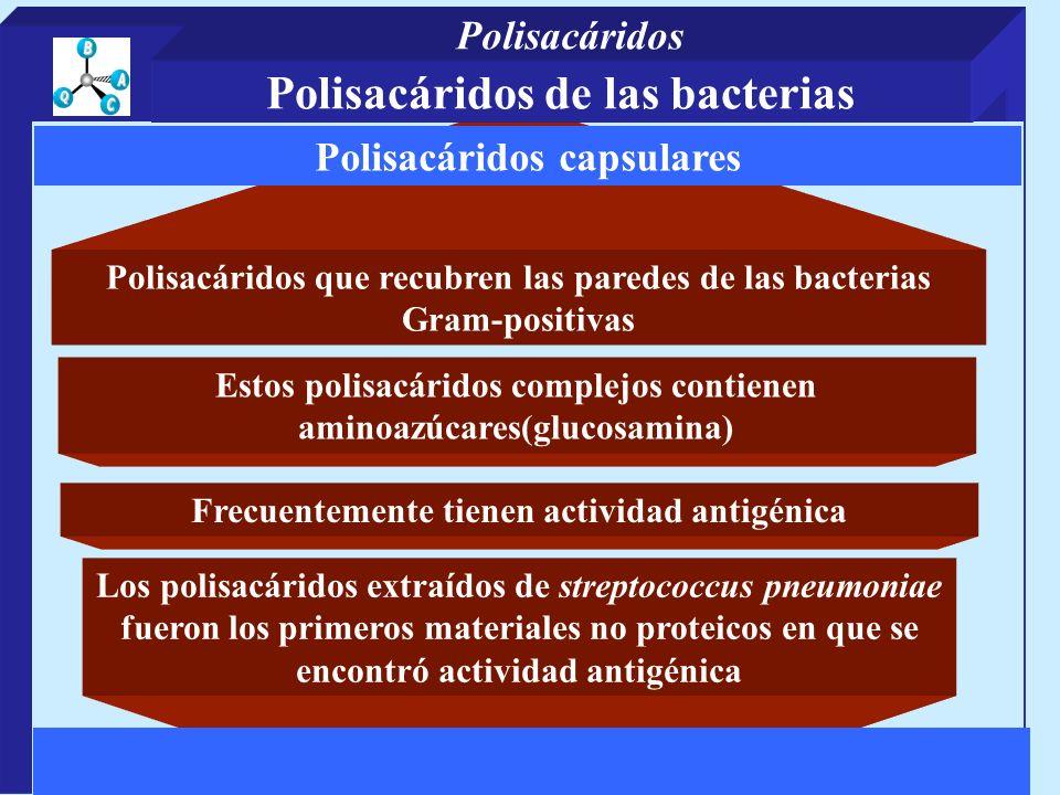 Polisacáridos que recubren las paredes de las bacterias Gram-positivas Los polisacáridos extraídos de streptococcus pneumoniae fueron los primeros mat